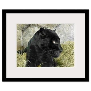 Black Panther Framed Prints  Black Panther Framed Posters