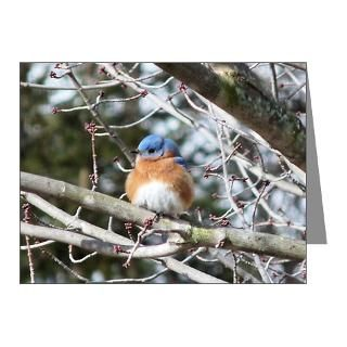 Gifts  Bird Note Cards  Eastern Bluebird Note Cards (Pk of 10