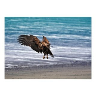 Golden Eagle Coming in For a Landing Invitation