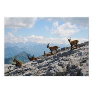 Ibex Wild Mountain Goats Personalized Invitations