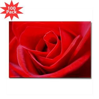 Beautiful Red Rose Gifts & Shirts  Red Rose Gifts, T shirts & Apparel