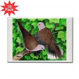 Ringneck Doves : Diane Jacky On Line Catalog