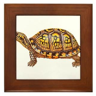 Eastern Box Turtle Framed Art Tiles  Buy Eastern Box Turtle Framed