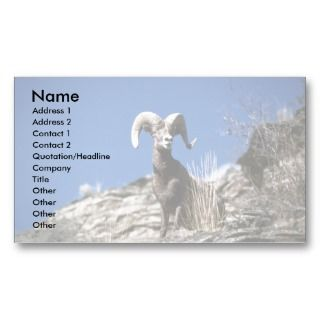 Bighorn sheep (Ram alert on face of mountain cliff Business Card
