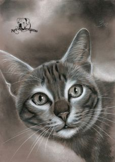 Tabby Cat Tiger Katze Kitten Kitty Chat Gato Feline Kater Kätzchen