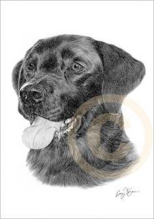 Dog Black Labrador Print Pencil Drawing A4 Signed Le of 50 Art