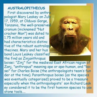 Australopithecus First Nutcracker Man Dinosaur Mini 3D Art Figure
