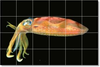 Top 20 Sea Life Photo Ceramic Tile Murals Buyers Choice