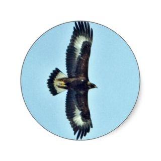 Golden Eagle in Flight Sticker