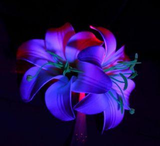 Light Up Fiber Optic Flower Hair Clip Rainbow Red LED Wedding