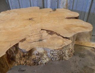 Large Wood Coffee Dining Table Top Slab Red Elm Circle Cut Tree Slice