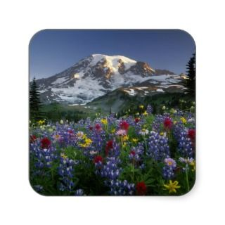 USA, Washington, Mt Rainier NP, Spectacular 2 Stickers