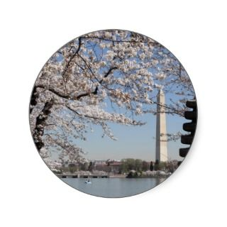 Cherry Blossom Washington DC Sticker