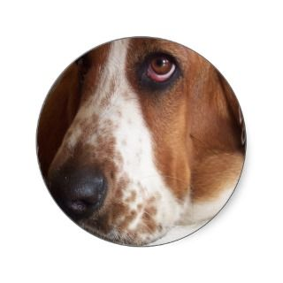 Basset Hound Dog Sticker
