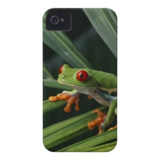 Red Eyed Tree Frog on Plant Case Mate iPhone 4 Case