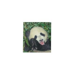 Panda cub, Wolong, Sichuan, China Memo Note Pad
