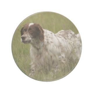 Spotted English Setter Dog Coaster