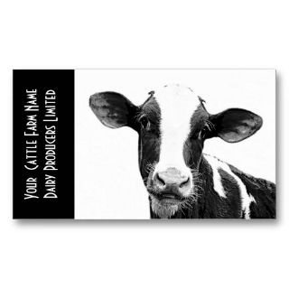 young holstein veal or dairy calf business card template $ 21 35