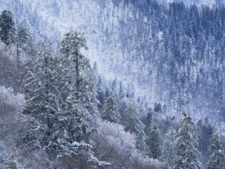 Snow Covered Trees in Forest, Great Smoky Mountains National Park, Tennessee, USA Photographic Print by Adam Jones