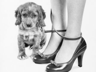 Legs of Woman in High Heel Shoes Tangled By Leash of Cocker Spaniel Puppy Photographic Print by H. Armstrong Roberts
