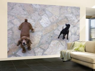 Two Dogs Barking Wall Mural – Large by Holger Leue