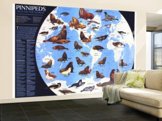 Pinnipeds Around The World Map 1987 Wall Mural – Large