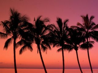 Palm Trees at Sunset, Hawaii, USA Photographic Print by Walter Bibikow