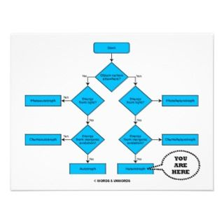 & Unwords: Heterotroph Flow Chart   You Are Here: Store