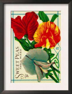 Sweet Peas Seed Packet Prints