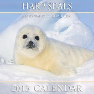 Harp Seals   2013 Calendar Calendars