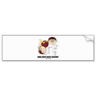 Wine Grape Berry Anatomy (Scientific Diagram) Bumper Sticker