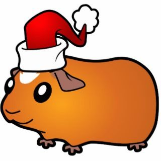 Christmas Guinea Pig (red crested) Photo Cut Out