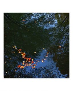 Floating Leaves Photographic Print by Anna Maria Miller