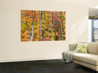 Autumn Leaves, White Mountains Wall Mural by Gareth McCormack