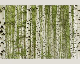 AP Digital   4701 36 Foto Tapete Vlies Neu Selbstklebend Bäume Birke