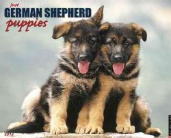 Just German Shepherd Puppies 2013 Calendar