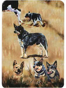 Australian Cattle Dog Playing Cards: Sports & Outdoors
