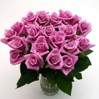 20 Mauve Long Stem Roses