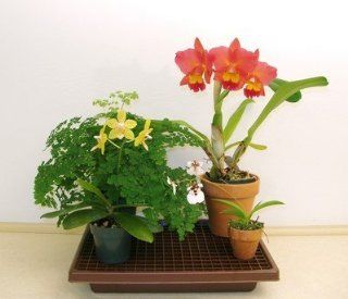 Plant Watering Humidity Tray 102 (26 x 10.5 x 2 1/4