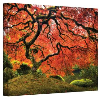 John Black  Japanese Tree  Gallery Wrapped Canvas Today $44.99 Sale