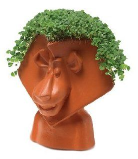 Joseph Enterprises CP162 16 Madagascar Chia Pet   Alex
