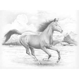 Sketching By Number Kit 11 1/2X15 1/2 Galloping Horse Today $12.29