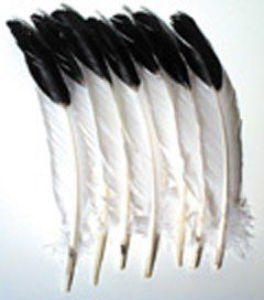 Imitation Eagle Quill Feathers; 12 per Pack; no. CK 4512