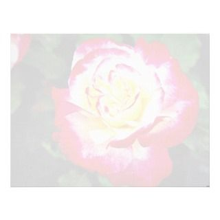 Hybrid Tea Rose Andeli White flow Custom Letterhead